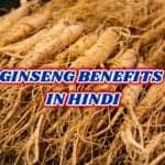 जिनसेंग के फायदे – ginseng benefits in hindi