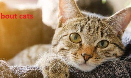 बिल्ली से जुड़े फैक्ट – facts about cats