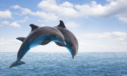 डॉल्फिन से जुड़े फैक्ट्स – facts about dolphins