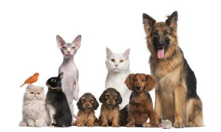 कुत्तों के लिए घातक फ़ूड्स – foods fatal to dogs