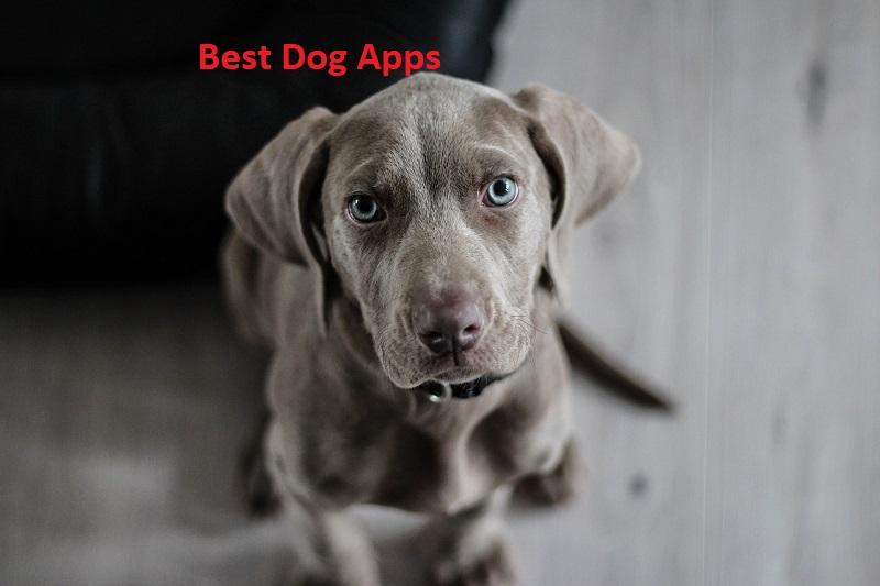 कुत्तों के लिए बेस्ट ऐप्स – Best Dog Apps