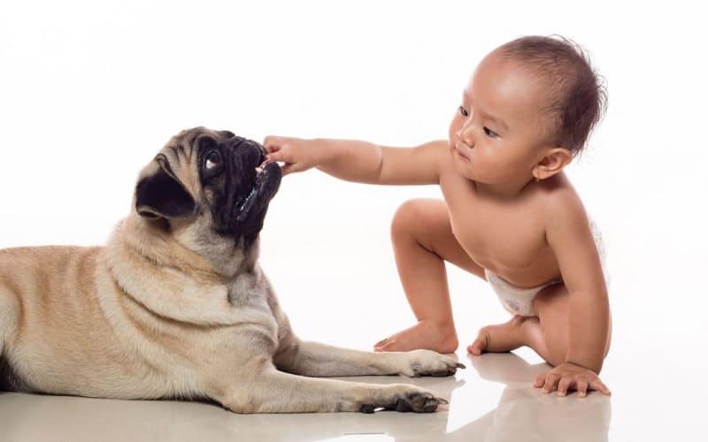 कुत्ते के काटने पर इलाज – Dog Bite Treatment