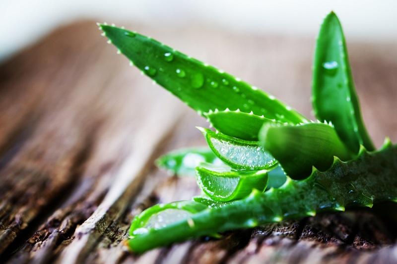 एलोवेरा के फायदे और साइड इफेक्ट – Benefits & Side effects of Aloe Vera